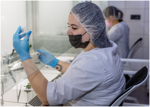 Crimean Federal University received a virus-free set of genomes of apple varieties in vitro from the Federal Scientific Center named after I. V. Michurin.